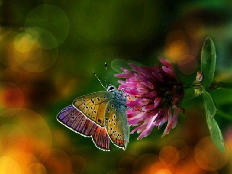 beautiful-colorful-butterflies-wallpaper