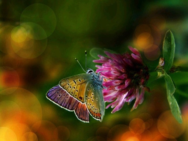 beautiful-colorful-butterflies-wallpaper