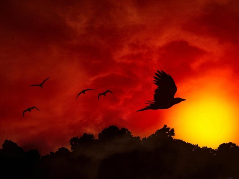 Beautiful_Birds_Fiery_Flight_W_1600x1200_wallpaperhi.com