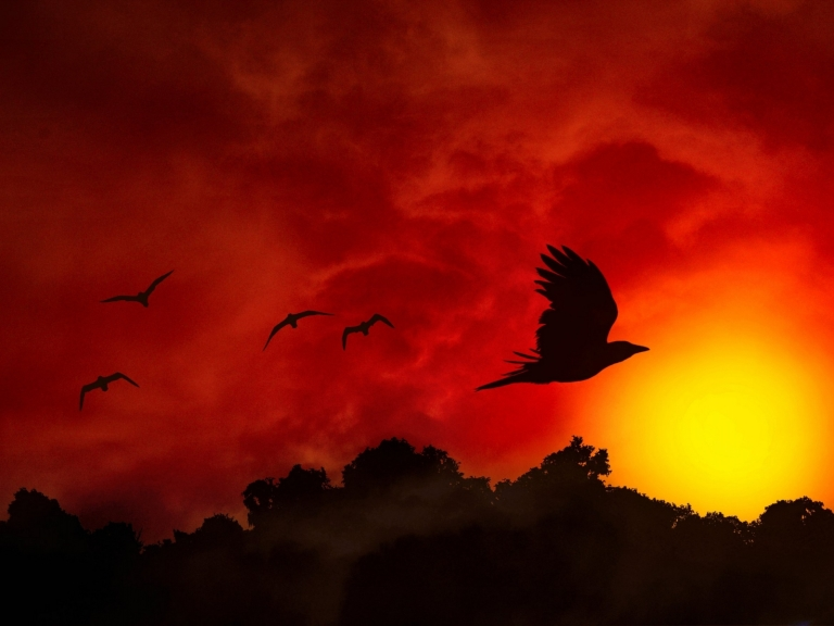 Beautiful_Birds_Fiery_Flight_W_1600x1200_wallpaperhi.com