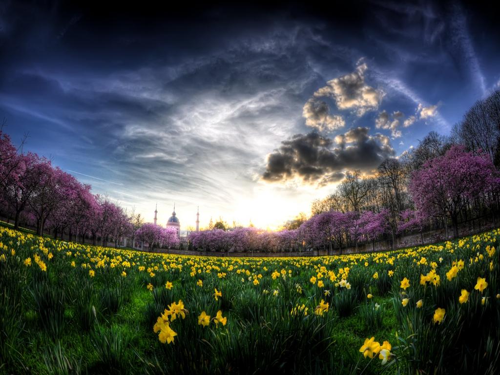 field-of-daffodils-wallpaper-fc7etb0c