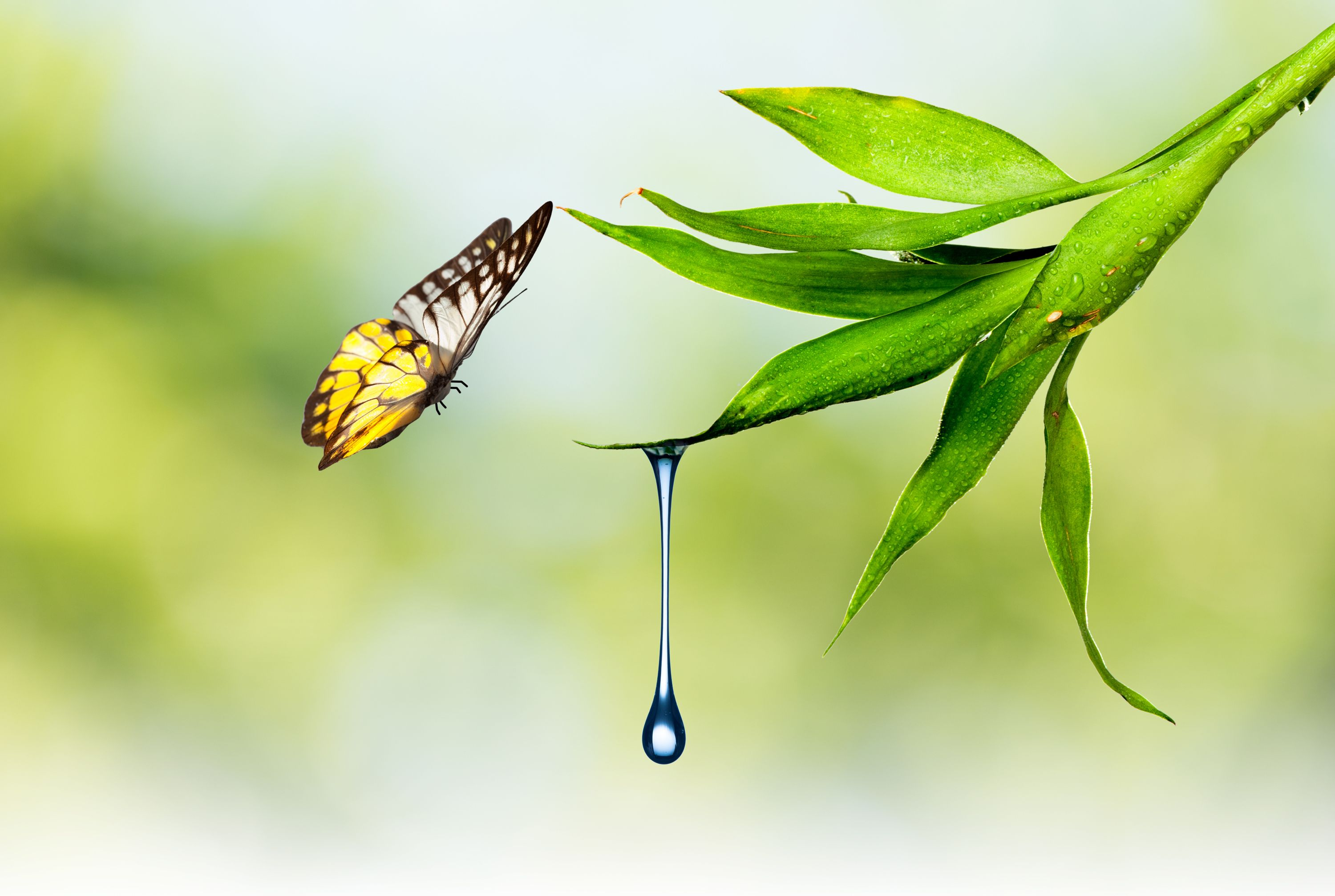 Flying-Butterfly-and-Green-Leaf-with-Waterdrop