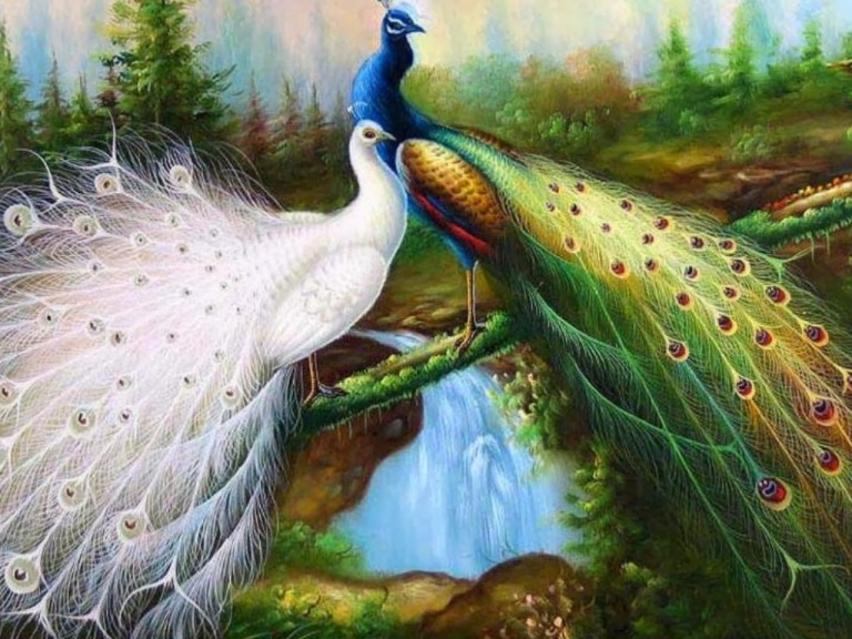 peacock wallpapers-16