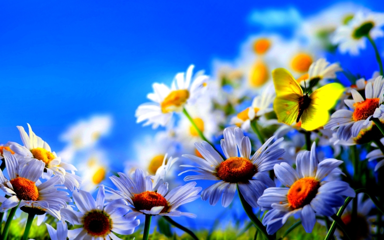 Spring-Flowers-And-Butterflies-Wallpaper-29